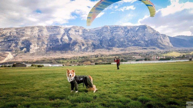 Emmenez votre compagnon fidèle grâce à ce harnais parapente pour chien
