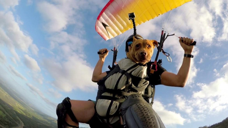 Le chien hawaïen qui aime voler en parapente