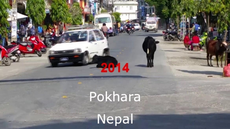 Stage parapente SIV à Pokhara au Népal